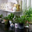 A Chef&#8217;s Guide to Growing a Kitchen Herb Garden